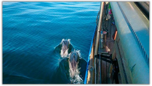 delfines y barco en marbella